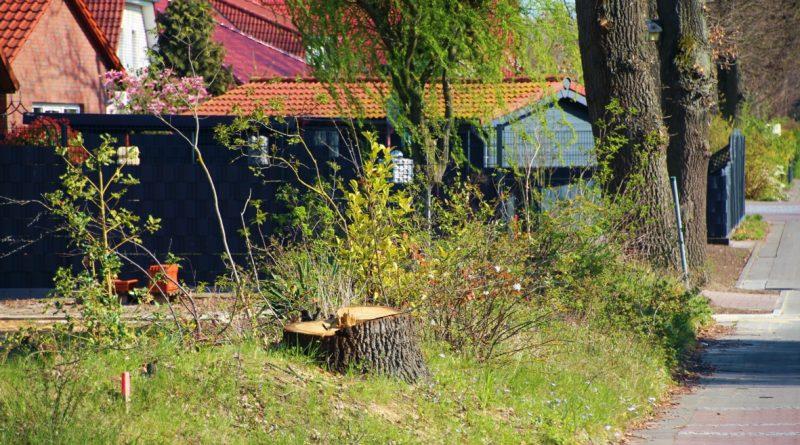 Bäume Ullmann