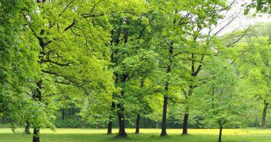 Baumpflanzaktion zum Klimaschutz