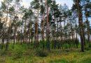 Wald_WES